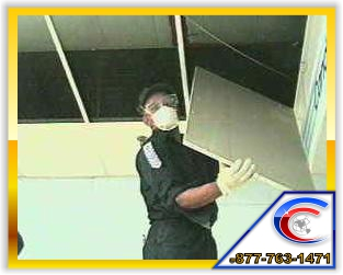 Ceiling Tile can be replace and the grids can be cleaned to save you valuable dollars over total ceiling replacement.